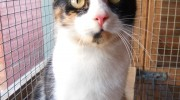 Cats Protection on the prowl for Bristol site to rehome unwanted pets